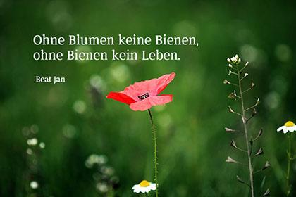 blumen sprüche weisheiten Bildersprüche   Blumenbilder mit Zitaten und kurzen Weisheiten blumen sprüche weisheiten