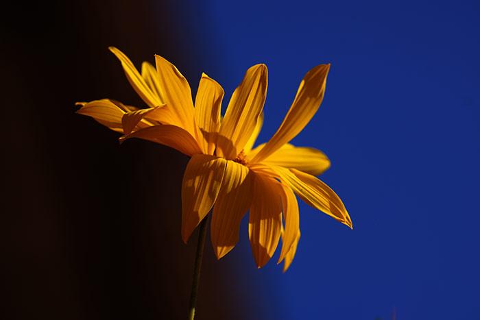 Blumen Fotos Kostenlose Und Lizenzfreie Naturbilder Mit