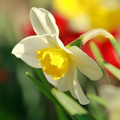 Blumenbilder Kostenlos Schöne Fotos Und Zeichnungen Mit