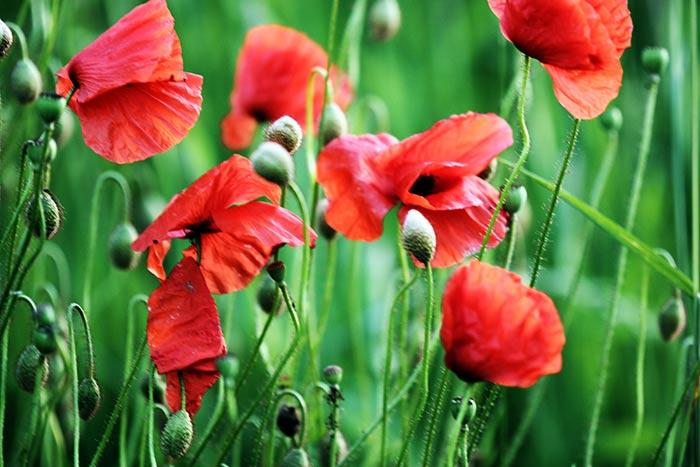 Blumenbilder Und Infos über Blumengattungen Und