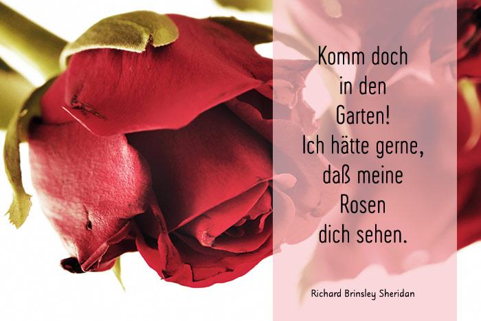 Rosen Sprüche Und Rosengedichte Liebe Moderne Und Klassische