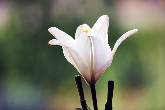 Schöne Blumenbilder Kostenlose Und Lizenzfreie Naturfotos