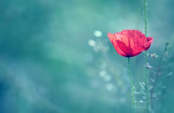 Geburtstag Bilder Blumen Gloriarerelist Blog